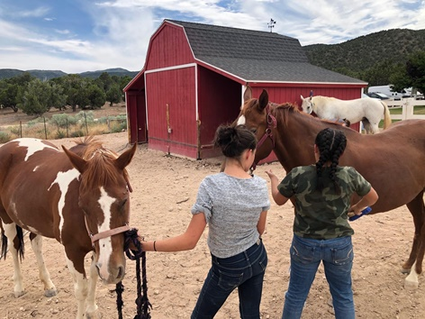 Daily Horse Care